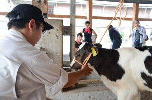 子牛との触れ合い体験をする参加者