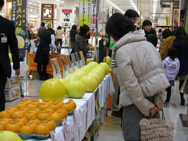 写真: 平成28年産晩白柚・不知火(品評会 出品果実)展示販売会