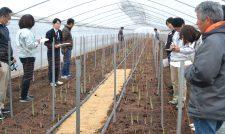 【アスパラ】生育確認 圃場を視察/JA熊本経済連