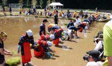 【田植え】泥んこバレー大会も/JAかみましき