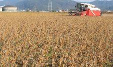 【大豆】うねる圃場 大豆収穫/JA熊本市