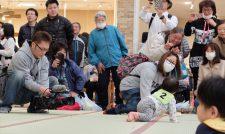 【い草】熊本産畳でハイハイ 八代市で全国赤ちゃん大会/JAやつしろ