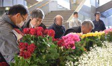 【花き】咲き競う 県品評会 小野さん(阿蘇市)バラ金賞/熊本県花き協会