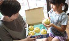 【梨】ギフト用梨「豊水」最盛 小箱入りシール付き ブランド感強調/JA熊本市