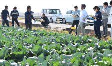 【キャベツ】加工・業務用キャベツ圃場視察 産地連携会/JA熊本経済連
