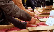 【サツマイモ】べにはるか ほりだしくん 貯蔵サツマイモ出番 販路広げ1900トン出荷へ/JA菊池