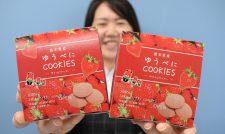 【6次産業化】ゆうべにクッキー 知名度向上に一役 古今堂/JA熊本経済連