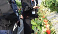 【イチゴ】万全な管理を 担当者会議で徹底/JA熊本経済連