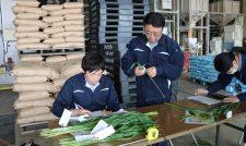 【高タンパク小麦】収量増へ着々 目標含有量12.5%超 葉色値調査 適正追肥量を指導/JAたまな