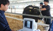 【和牛】超音波で肉質分析 高値販売へ牛厳選 技術向上狙う/JAくま
