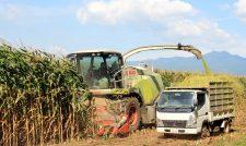 【コントラクター】酪農の自給飼料 コントラクター コーン収穫活躍 牛管理専念 面積も増 数日作業を1日で/JA菊池