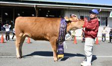 【共進会】熊本県畜産まつり共進会Gチャンプ/熊本県畜産農業協同組合