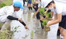 [未来を見つめる わたしの地域のSDGs](5) 児童が農学ぶ機会に 田植え体験への協力 JA熊本市