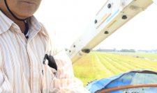 【春ソバ】春ソバ上出来 JA熊本市管内の乙畠営農組合